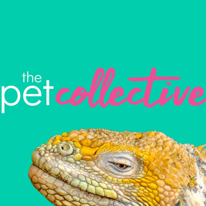 thepetcollective